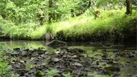 Vittel : Quels enjeux pour l'avenir de la ressource en eau ?