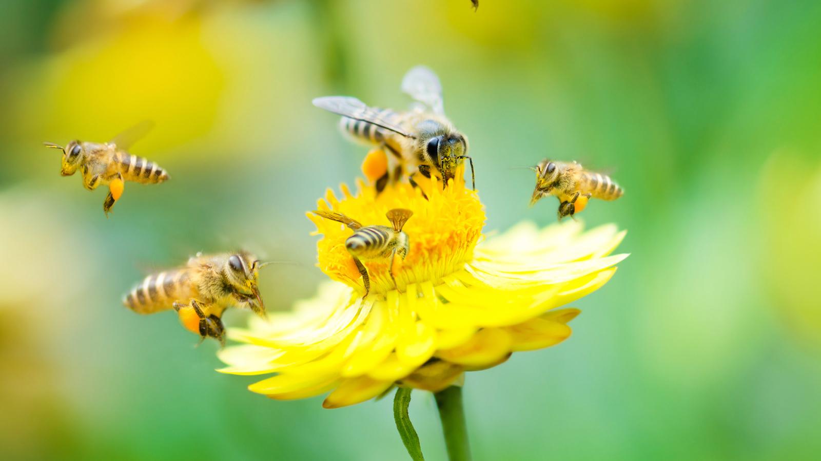 plan pollinizz